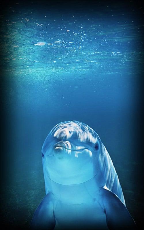 Dolphin in Bonaire
