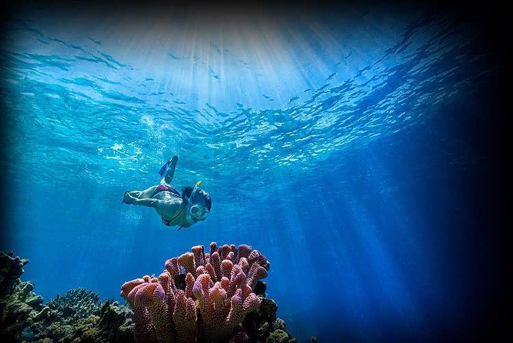 Free diving Bonaire