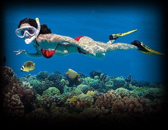 Reef watching
